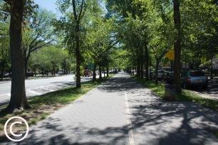 My Brooklyn (8)